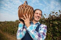 Landwirt Carrying Basket Full von Trauben Stockbild