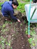 Landwirt an den Arbeitssäenpuffbohnen lizenzfreie stockbilder
