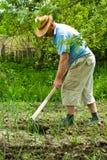 Landwirt, der angebaute Zwiebel gräbt Stockfoto