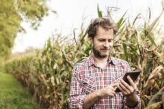 Landwirt, der an der Anwendung der Tablette vor Maisfeld arbeitet lizenzfreie stockfotos