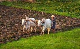 Landwirt, der auf dem Gebiet arbeitet Lizenzfreie Stockfotografie