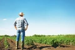 Landwirt, der auf dem Gebiet mit Grünpflanzen steht stockfotografie