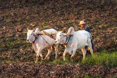 Landwirt, der auf dem Gebiet mit Wasserbüffel arbeitet Lizenzfreie Stockfotografie