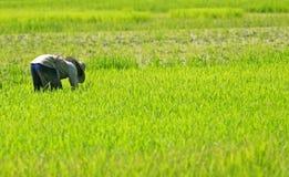 Landwirt, der auf dem Paddygebiet arbeitet Lizenzfreie Stockfotos