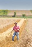Landwirt, der auf dem Weizengebiet in der Erntezeit geht lizenzfreie stockfotografie