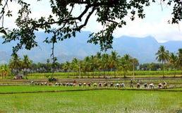 Landwirt, der auf den Gebieten pflanzt Stockbilder