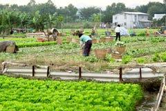Landwirt, der in bebautem Land arbeitet Stockbilder
