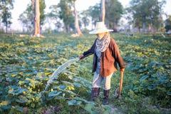 Landwirt, der Düngemittel und Wasser zum Kürbis gibt Lizenzfreies Stockbild