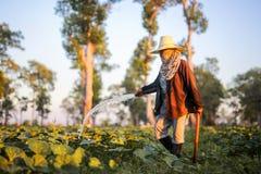Landwirt, der Düngemittel und Wasser zum Kürbis gibt Lizenzfreie Stockfotos