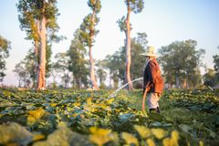 Landwirt, der Düngemittel und Wasser zum Kürbis gibt Lizenzfreie Stockbilder