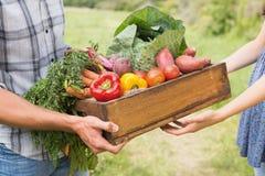 Landwirt, der dem Kunden Kasten veg gibt lizenzfreies stockfoto