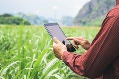 Landwirt, der den Tablet-Computer überprüft Daten von Landwirtschaft sugarc verwendet stockfoto