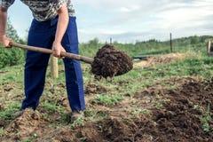 Landwirt, der die Erde gräbt, um ein tiefes Bett in des Gemüsegartens zu errichten lizenzfreie stockfotos