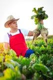 Landwirt, der die Qualität der Zuckerrüben überprüft stockfotografie