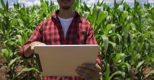 Landwirt, der digitalen Tablet-Computer, bebaute Maisplantage verwendet stockbild