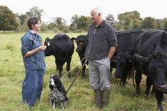 Landwirt in der Diskussion mit Tierarzt auf dem Gebiet Lizenzfreie Stockfotos