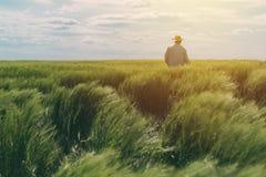 Landwirt, der durch ein grünes Weizenfeld geht stockbilder