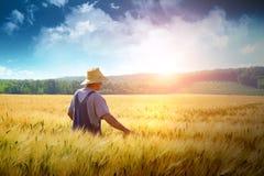 Landwirt, der durch ein Weizenfeld geht Stockfotografie