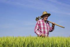 Landwirt, der durch Weizenfeld am sonnigen Tag geht Stockfotografie
