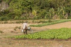Landwirt, der ein Bauernhoffeld wässert Kampot, Kambodscha Stockbild