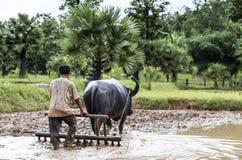 Landwirt, der ein Feld unter Verwendung eines Büffels pflügt lizenzfreie stockfotos