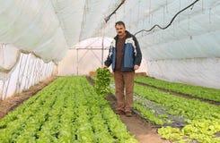 Landwirt, der in einem Gewächshaus arbeitet Lizenzfreie Stockbilder