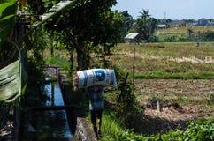 Landwirt, der einen Sack Reis trägt Stockbilder