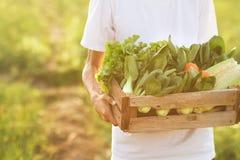Landwirt, der frisches Produkt des grünen Gemüses am kleinen Bauernhof trägt stockfotografie