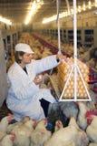 Landwirt, der im Huhn-Bauernhof arbeitet Stockbild