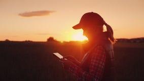 Landwirt der jungen Frau, der mit Tablette auf dem Gebiet bei Sonnenuntergang arbeitet Der Inhaber eines Kleinbetriebkonzeptes lizenzfreies stockfoto