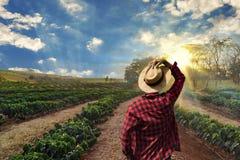 Landwirt, der an Kaffeefeld bei dem Sonnenuntergang im Freien arbeitet stockfoto