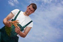 Landwirt, der Karotten erntet Lizenzfreie Stockfotos