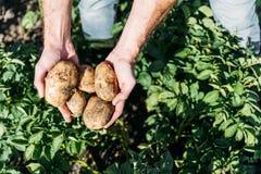 Landwirt, der Kartoffeln auf dem Gebiet hält lizenzfreie stockfotos
