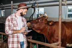 Landwirt, der Kenntnisse im Kuhstall nimmt lizenzfreies stockbild
