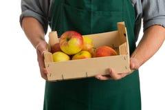 Landwirt, der Kiste mit frischen geernteten Äpfeln hält stockfoto