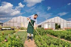 Landwirt in der Landwirtschaft, die Gemüse - Gewächshäuser im Th anbaut lizenzfreies stockfoto