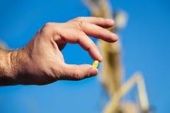 Landwirt, der Maissamen hält stockfotos