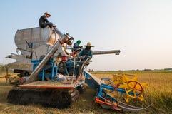 Landwirt, der Reis im Reisfeld mit Ernteauto erntet lizenzfreie stockfotos