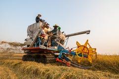 Landwirt, der Reis im Reisfeld mit Ernteauto erntet stockbild