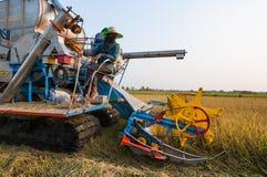 Landwirt, der Reis im Reisfeld mit Ernteauto erntet lizenzfreies stockbild
