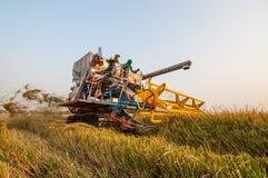 Landwirt, der Reis im Reisfeld mit Ernteauto erntet lizenzfreie stockfotografie