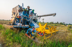 Landwirt, der Reis im Reisfeld mit Ernteauto erntet lizenzfreie stockbilder
