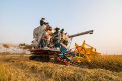 Landwirt, der Reis mit Ernteauto erntet lizenzfreie stockfotos