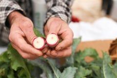 Landwirt, der Rettich hält Lizenzfreie Stockfotografie
