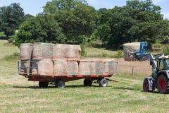 Landwirt, der ringsum Heuballen auf einen Anhänger lädt Stockbilder