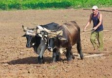 Landwirt, der sein Feld in Kuba pflügt Lizenzfreie Stockfotografie
