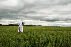 Landwirt, der seine Ernte überprüft stockfotos