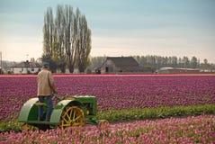 Landwirt, der seinen Traktor reitet Lizenzfreie Stockbilder