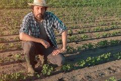 Landwirt, der an Sojabohnenplantage, Untersuchungsernteentwicklung arbeitet lizenzfreies stockfoto