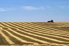 Landwirt, der Strohballen auf dem geernteten Gebiet transportiert Lizenzfreie Stockbilder
